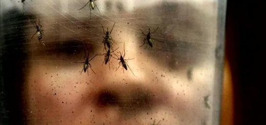 医学专家解释了Zika病毒