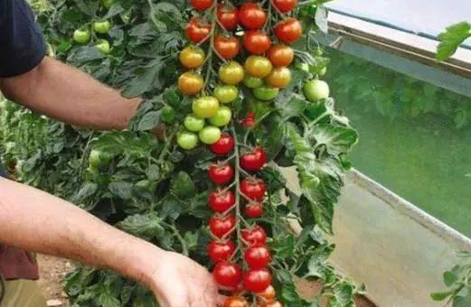 这3类蔬菜买一次够吃一年!在家就能种,新鲜健康又省钱!
