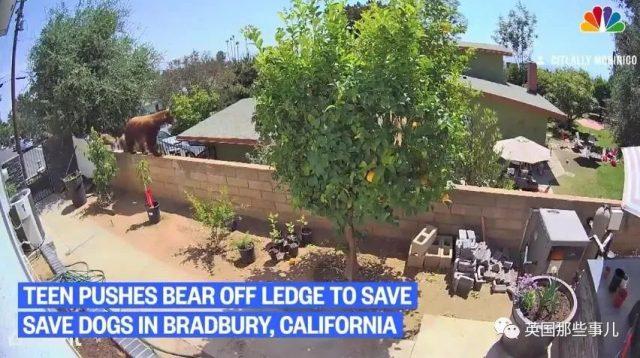 美国17岁少女徒手推大熊,就为保护自家狗,最后居然只受了点轻伤!